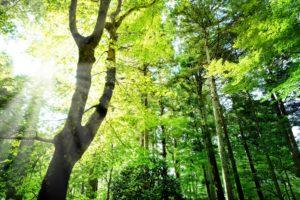 森でのワークショップ
