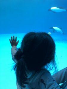水族館で夢中の娘